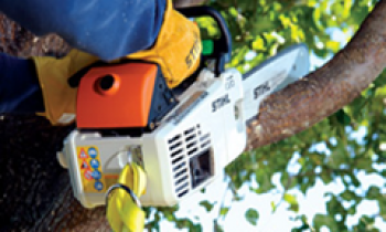 CroppedImage350210-Stihl-In-Tree-saws.png